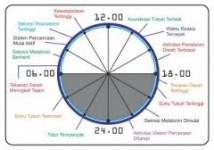 jam kerja tubuh manusia